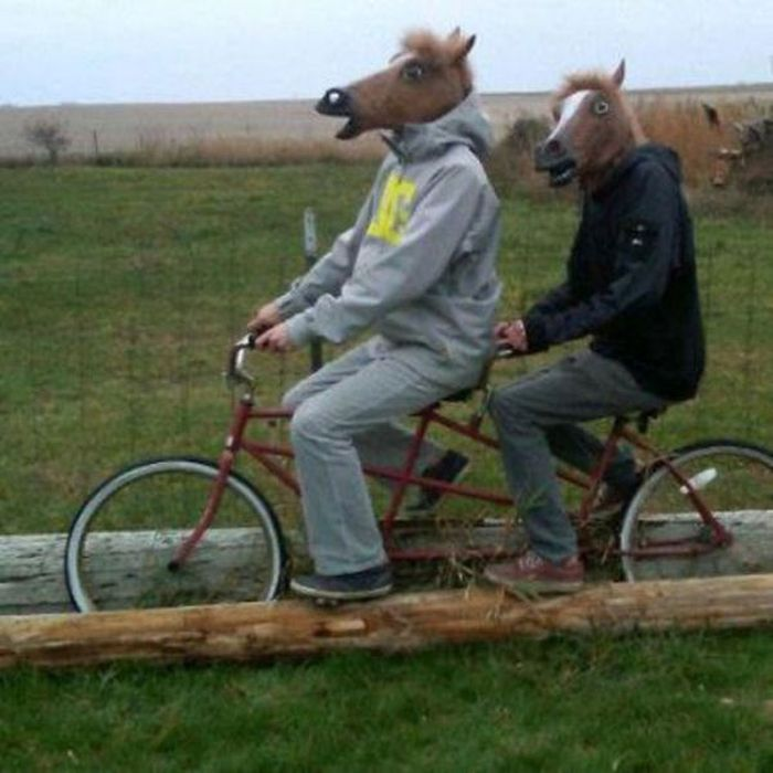27 Most Funny Horse Images