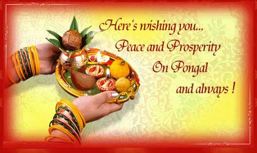 35 best happy pongal greetings picture heres wishing you peace and prosperity on pongal and always greetings m4hsunfo Image collections