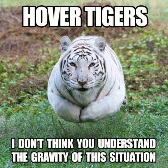 27 Most Funny Tiger Pictures