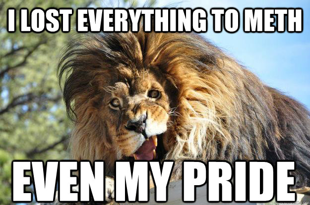 I Lost Everything to Meth Funny Lion Meme 25 very funny lion pictures,Lions Meme