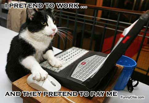 Funny Cat Meme About Work : Trying to stay positive attack of the funny