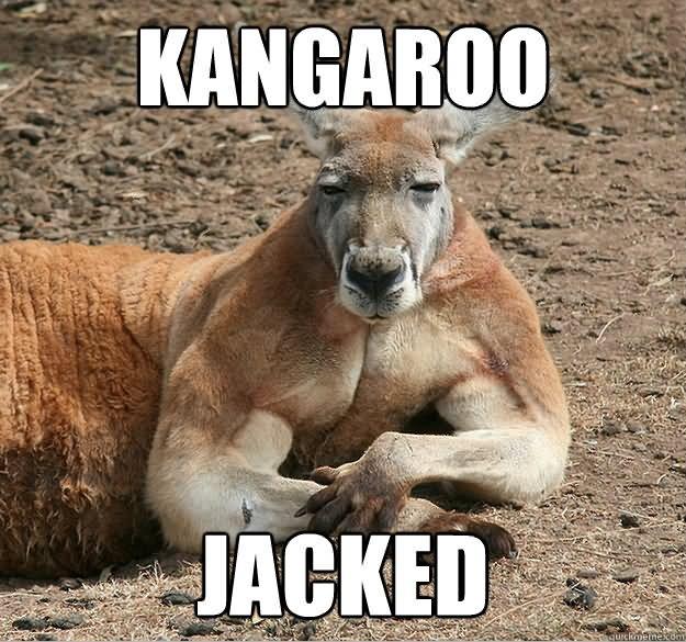 kangaroo meme jacked funny memes most quickmeme askideas
