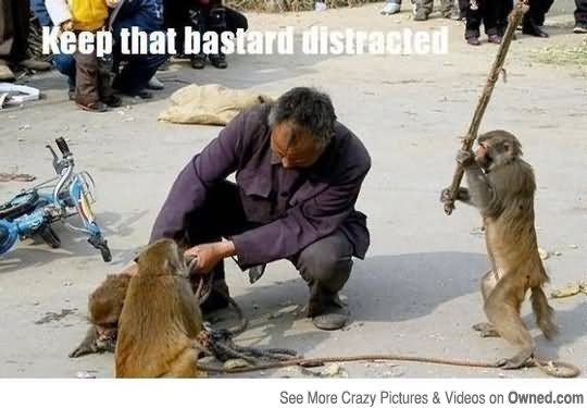 25 Very Funny Monkey Pictures