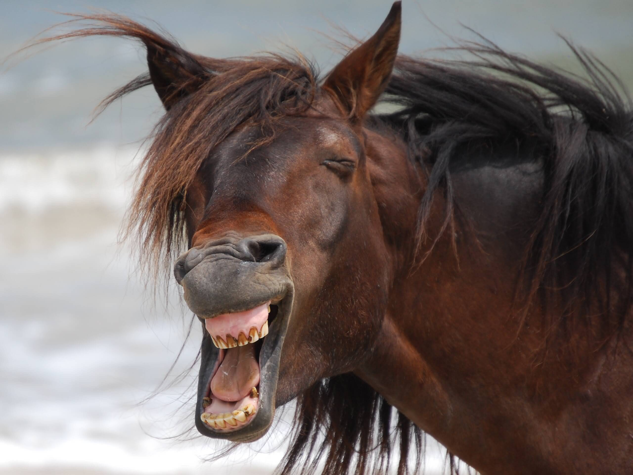 Laughing Face Funny Horse Picture - photo#20