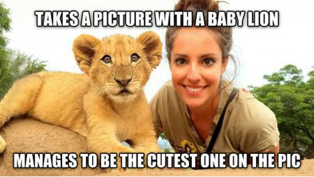 Manages To Be The Cutest One On The Pic Funny Lion Meme