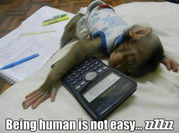 Monkey Sleeping While Study Funny Picture
