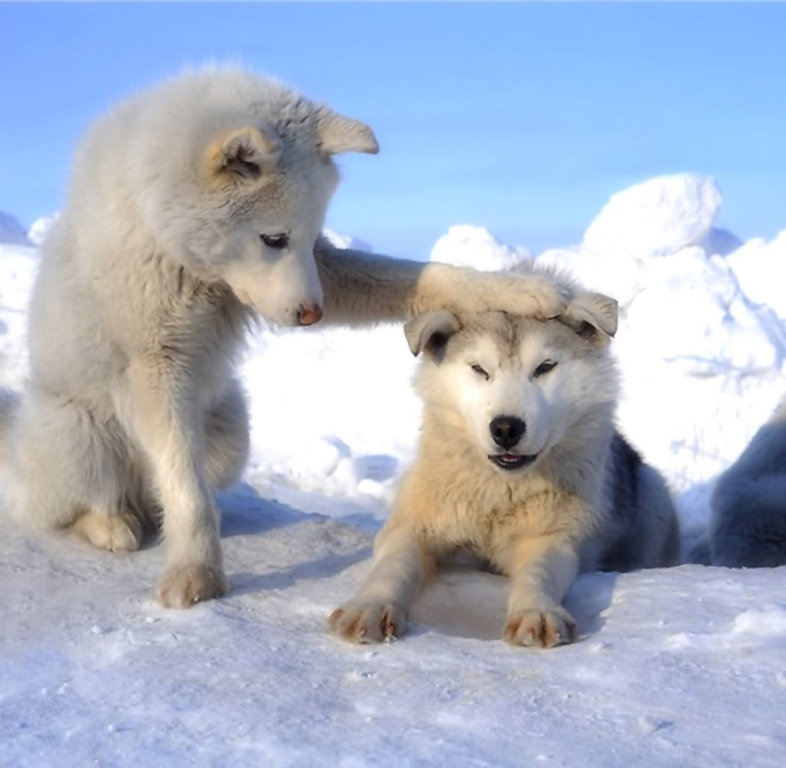 10 Funny Wolf Pictures
