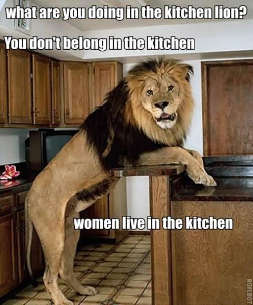 Don't Listen To Him He's Lion Funny Lion Meme