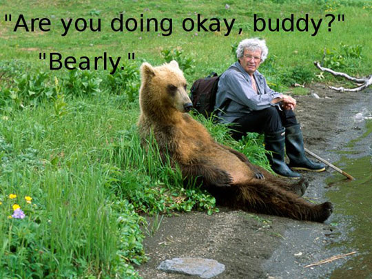Are You Doing Okay Buddy Bearly Funny Bear Meme are you doing okay buddy bearly funny bear meme