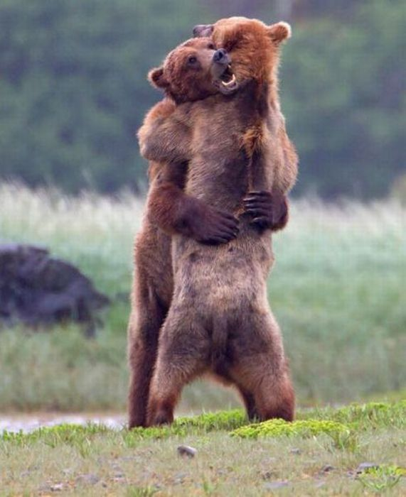 Bear Hugging Funny Picture For Whatsapp