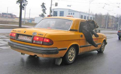 Výsledek obrázku pro funny taxi