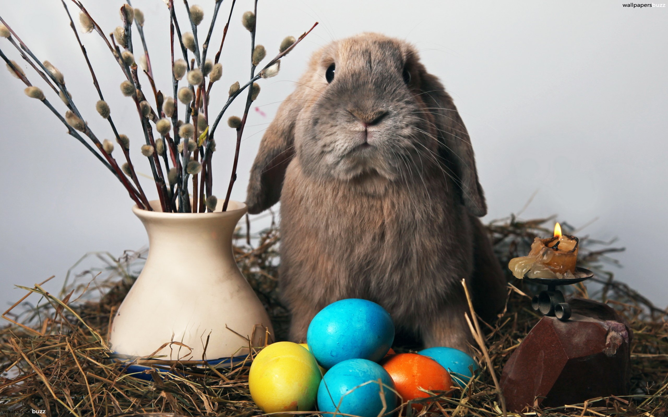 Funny rabbit funny rabbit pictures pictures of rabbits funny - Cute Bunny And Colorful Easter Eggs Funny Picture