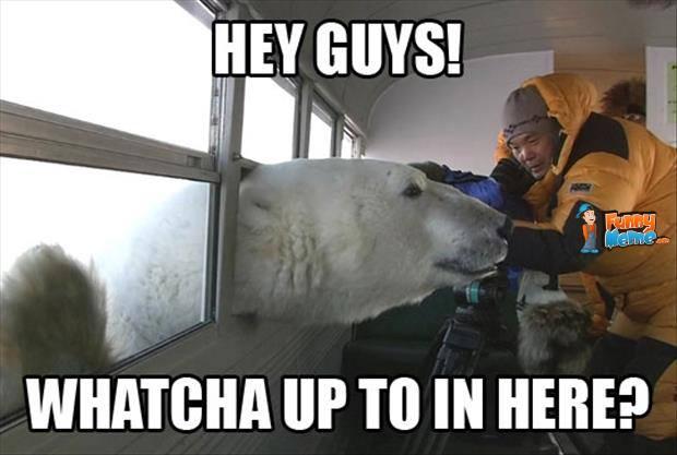 Funny Zoo Memes : Hey guys funny bear meme