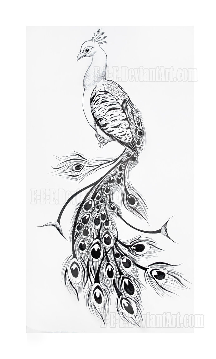 Black peacock tattoo images galleries for Peacock tattoo black and white