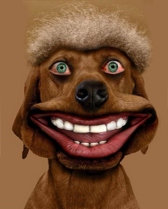 Dog Smiley Face With Funny Teeth