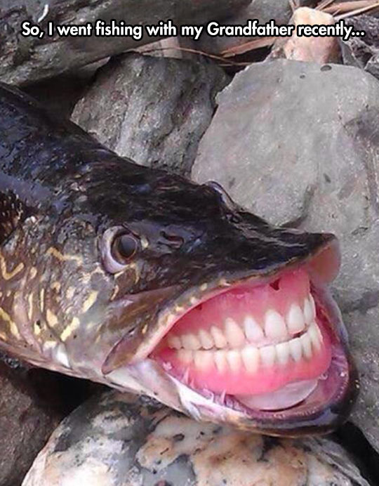 frog with human teeth funny photoshopped