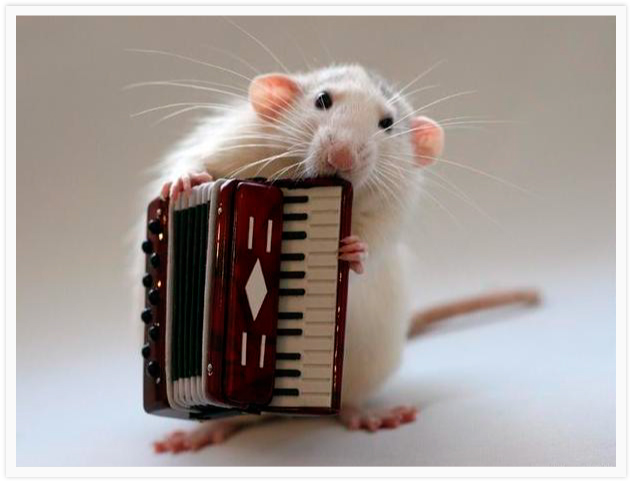 Funny Mouse Playing Accordion