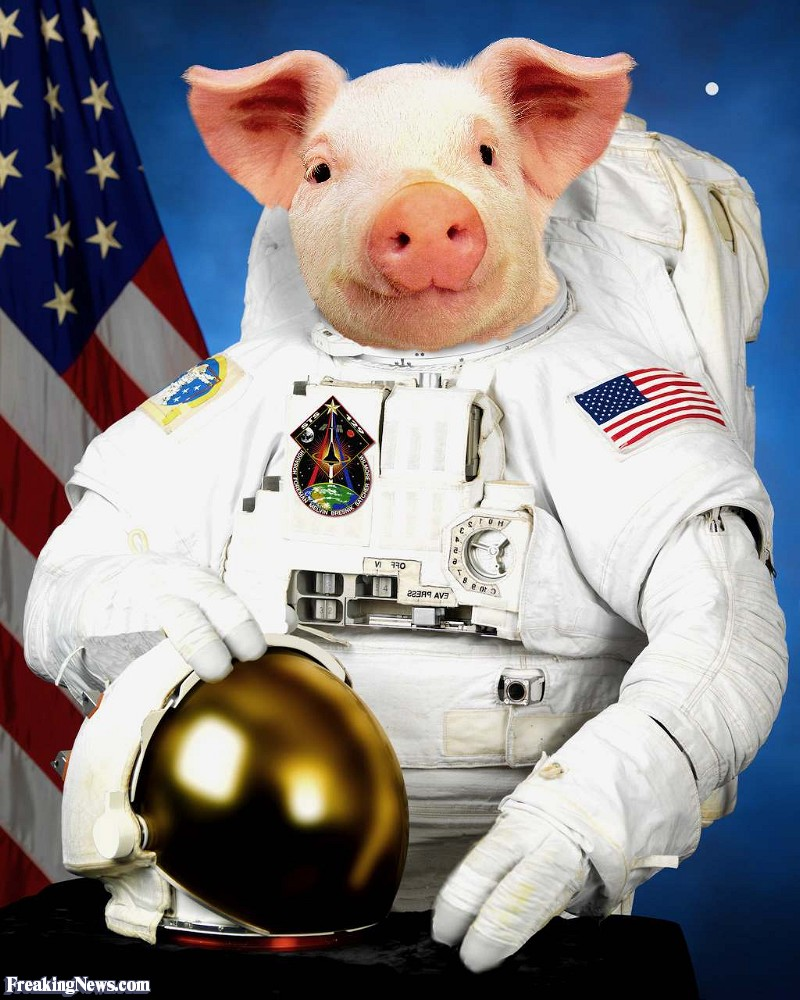 cow astronaut - photo #34