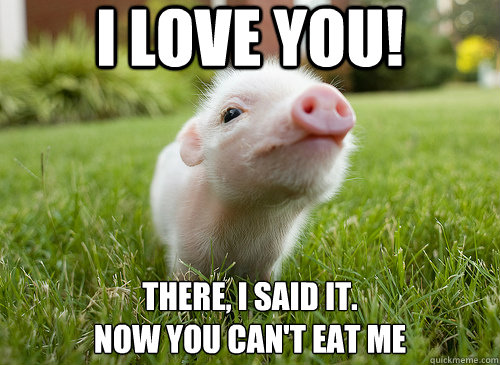 Love Me Meme Funny : I love you there i said it now you can t eat me funny pig meme