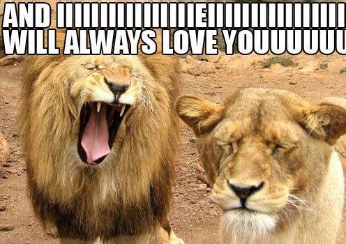 Lion Funny Love Couple