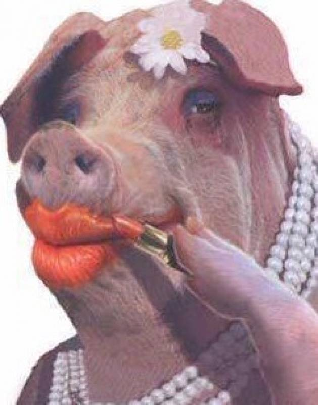 Lipstick on a pig pictures