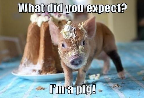 17 Most Funny Pig Pictures