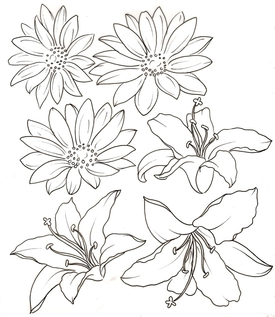 Lily Tattoo Line Drawing : Black tribal lily flowers tattoo stencil by colorfulcandie