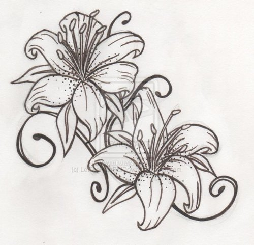 Water Lily Stencil Black And White: 7 Lily Tattoo Samples, Stencils And Design Ideas