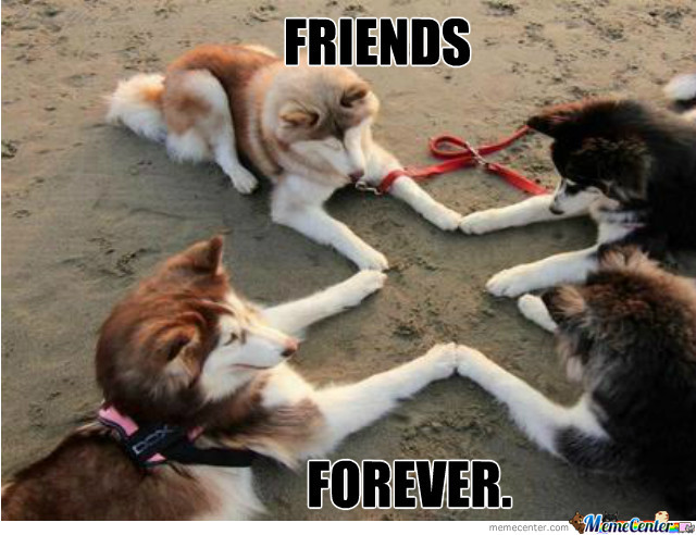 Funny Meme Pictures Of Dogs : Dogs friends forever funny meme