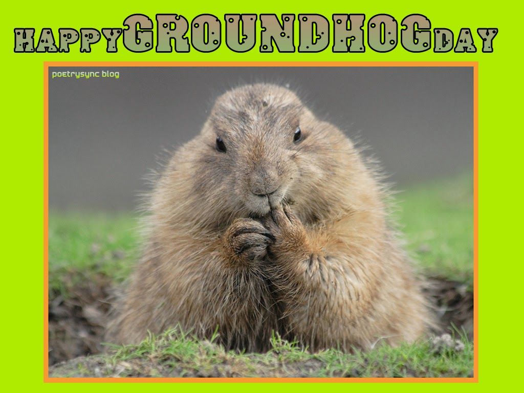 25 very best groundhog day pictures and images