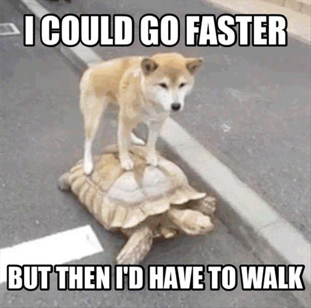 I Could Go Faster Funny Lazy Dog Meme