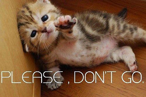 [Image: Please-Dont-Go-Sad-Kitten-Picture.jpg]