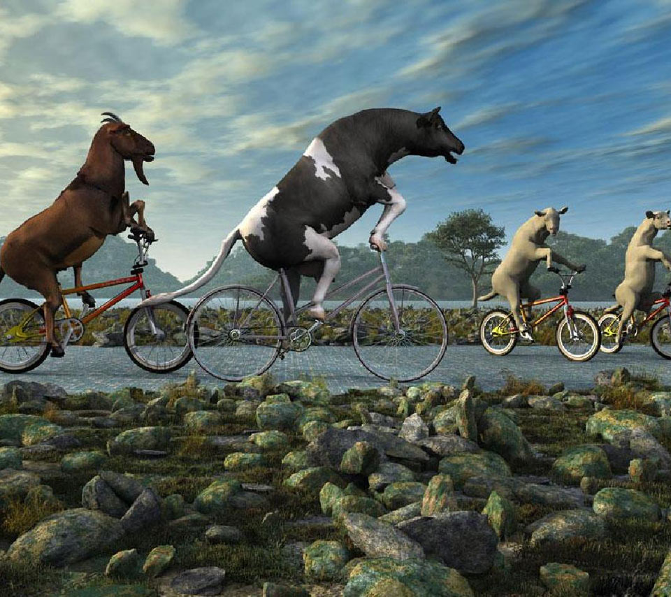 Animals Riding Bicycle Funny Picture