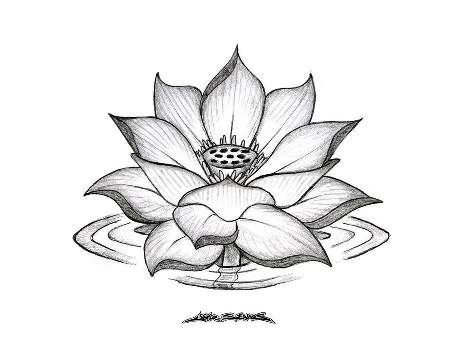 Black and grey lotus flower tattoo design by muddygreen mightylinksfo