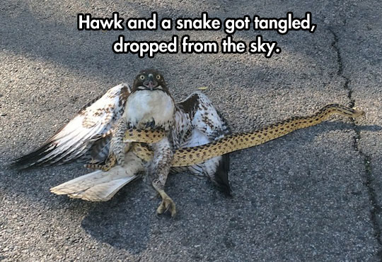 Eagle And Snake Fighting Funny Image