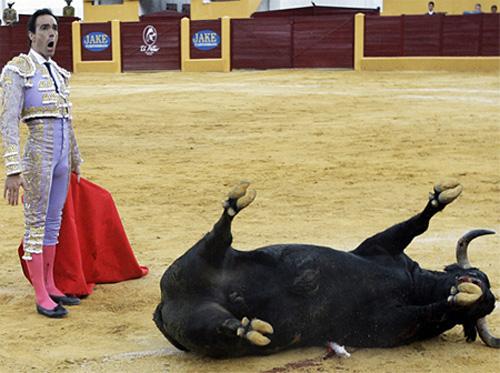 ผลการค้นหารูปภาพสำหรับ spain the bull funny