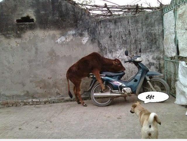 Funny Bull Riding Quotes: Askideas.com