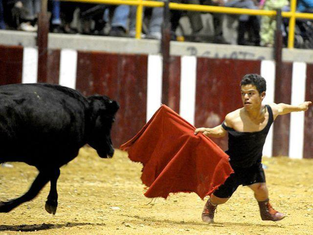 16 Funny Bull Pictures And Photos