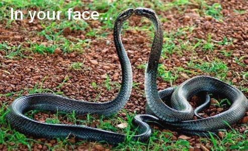 funny snake quotes