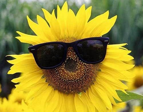 See This Flower I Hate It Funny Meme