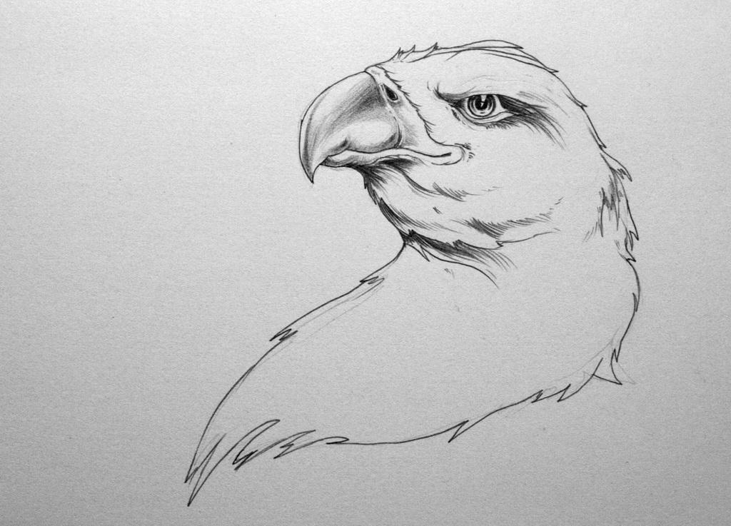 Line Drawing Face Tattoo : Amazing hawk head tattoo stencil by zioman