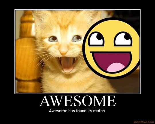 match video loves cats She loves string toys and is as sweet as honey we will help you find the purrfect match stop in and see our adoptable cats and kittens at the following locations:.