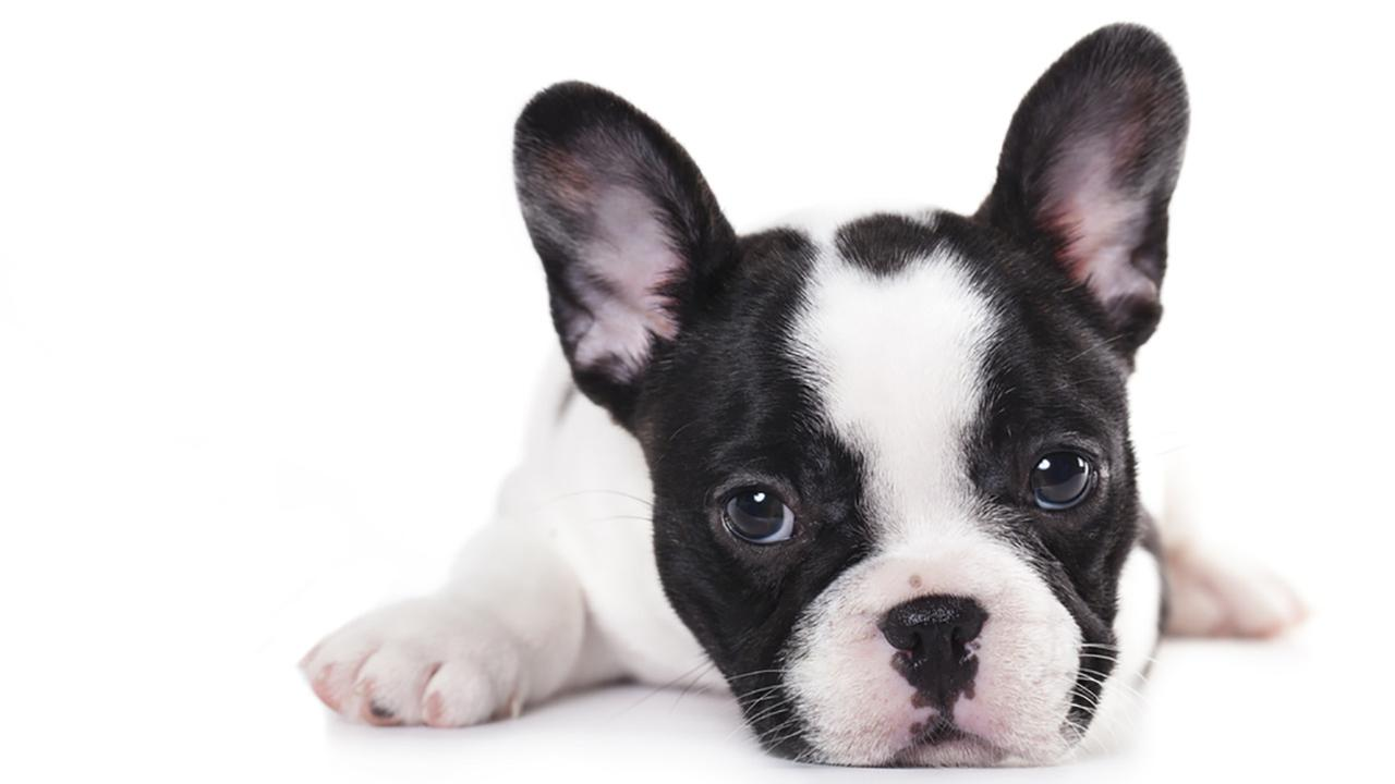 10 Ideas Of Cute Puppies Pictures For Pet Website Graphics