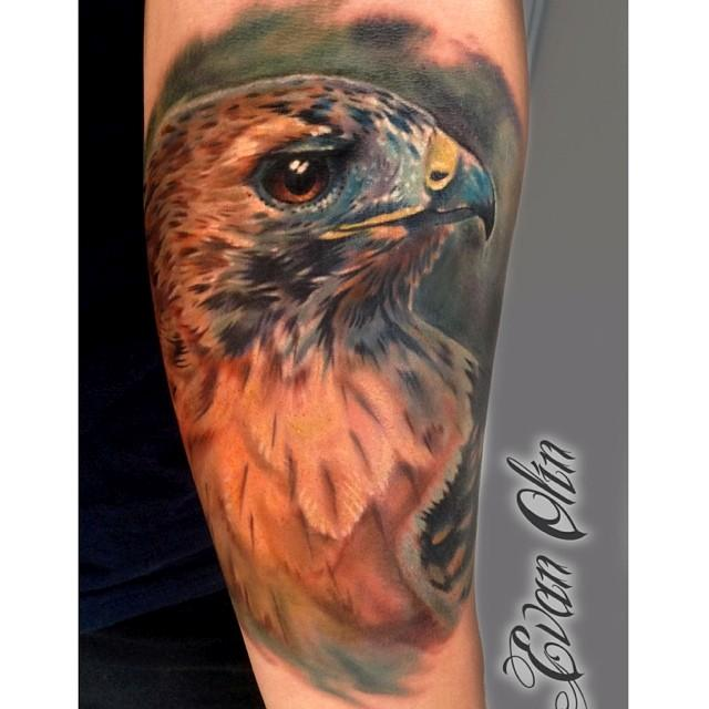 Tattoo Quotes Hawk: Colorful Hawk Head Tattoo Design By Evan Olin
