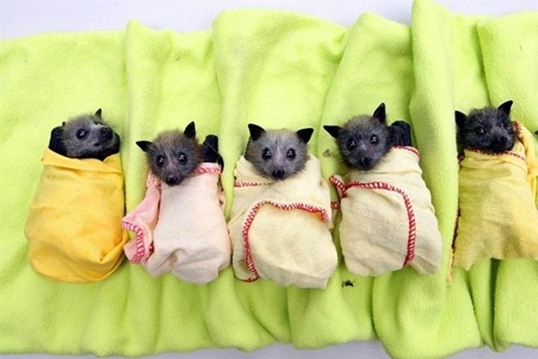 30 Funny Bat Pictures And Images
