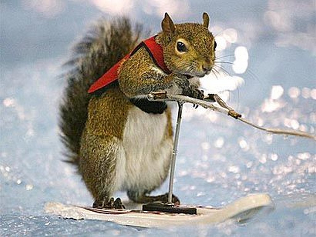 31 most funny squirrel images and pictures - Funny squirrel backgrounds ...