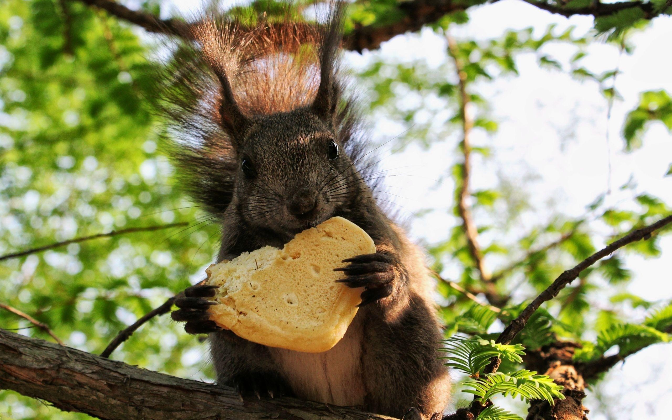 Funny-Squirrel-Eating-Cookie.jpg
