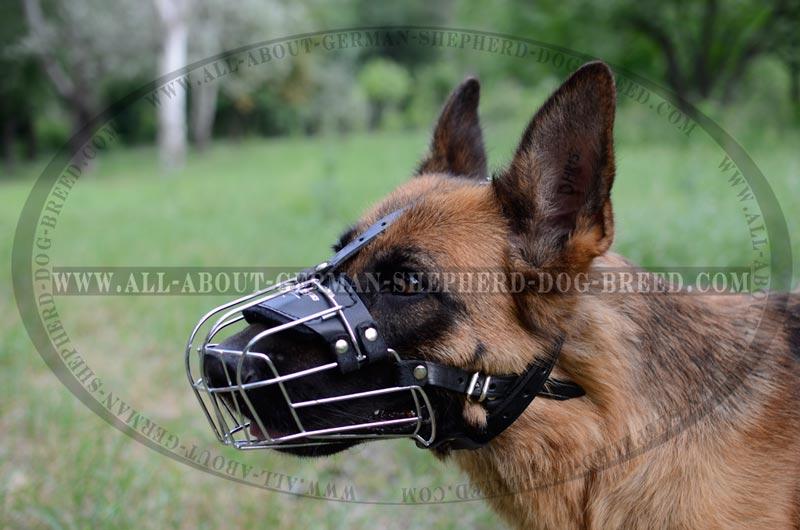 Image Result For Best Dog Leash For German Shepherd