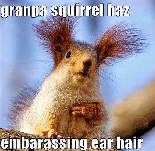 31 most funny squirrel images and pictures