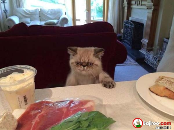 25 Most Funny Hungry Pictures